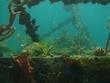 SCUBA (& related marine/hospitality/eco) website copy @ 33% discount