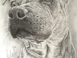 Draw portrait of your pet (realistic)