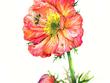 Draw 50x70 cm watercolour/crayon/watercolour illustration