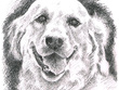 Draw a portrait of your pet