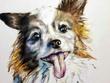 Create a full-color pet portrait for you!