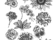 Draw an illustration for you in old engraving style for