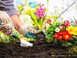 Guest post on home gardening blog with da 73