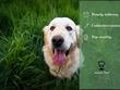 Write 500 word Incisive Pets Blog Post
