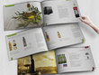 Design brochure / magazine / catalog with unlimited revisions