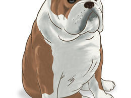 Digitally paint a portrait or cartoon of your pet