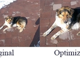 Optimize 30 photos for web