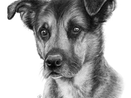 Create for you a beautifully hand drawn pet portrait
