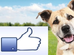 Provide 3000+ real Facebook likes with money back guarantee