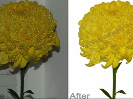 Retouch 20 images background