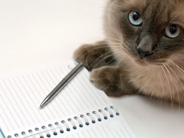 Write a purrfect press release, article or blog up to 500 words
