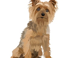 Draw your dog pet cat cartoon portrait  from your photo