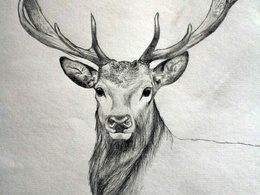 Draw an animal you like