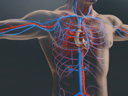 Create medical or scientific 3D models and animations