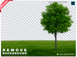 Background removal professionally