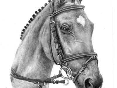 Draw high detail pet portraits A4 size