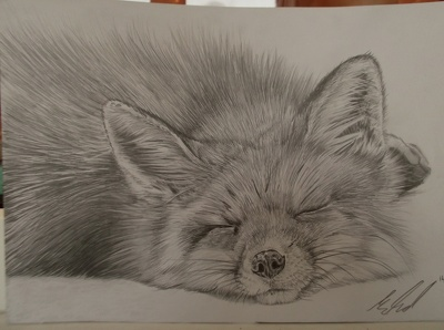 Draw a photo-real fox by hand