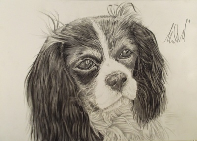 Produce a hand drawn hyper real pet portrait