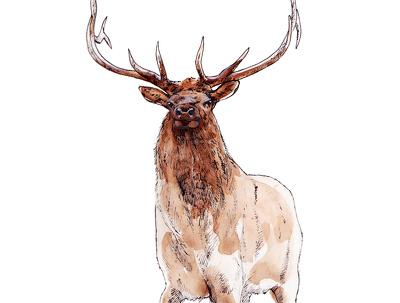 Design unique sketch and watercolour illustrations