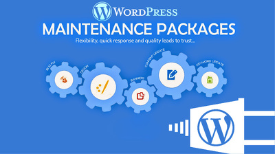 Offer you one hour of wordpress service