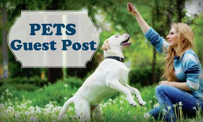 Publish Guest Post on DA33 Pets blog
