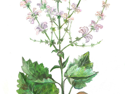 Draw a beautiful botanical illustration