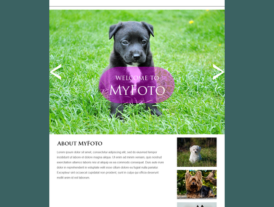 Pet Photography Website(Uncoded – PSD layout )+Name+Logo for Sale