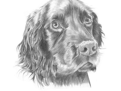 Draw your pet for yourself or as a gift for a loved one (A4 Portrait)
