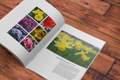 Design a professional brochure/catalogue/magazine/fashion lookbook
