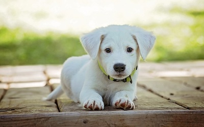 Write a 500 words article or blog post for a pet website