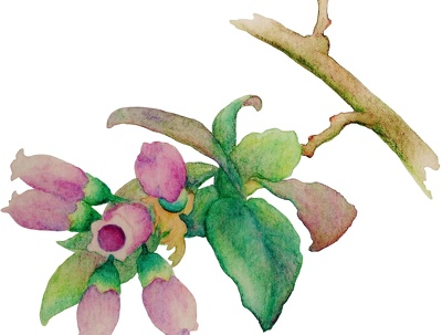 Create a single-subject watercolor painting from your reference image
