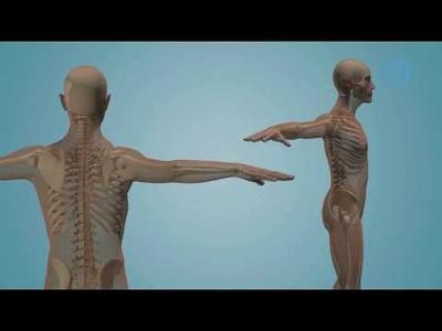 Create 3D / 2D medical animation