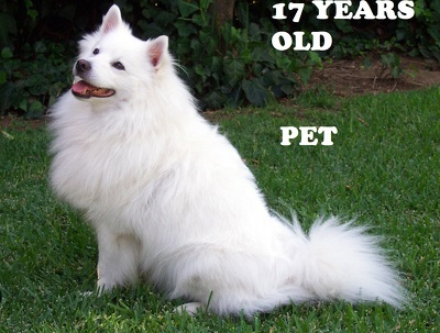 Guest post on 3 Quality Pet and Animals 17 Years niche blog