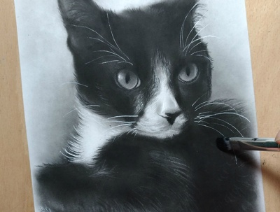 Draw from photography, custom animal/pet/cat/dog portrait