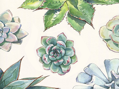 Do watercolor illustration or water color painting