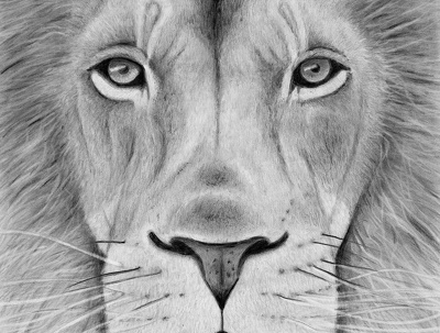 Draw an A4 sized animal or pet portrait from any photograph.