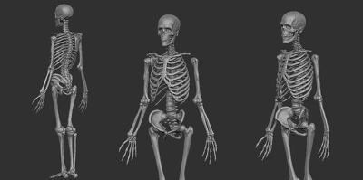 Create anathomical 3d model of human or animal