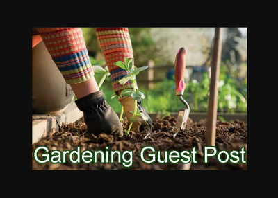 I will publish your guest post on home and gardening blog