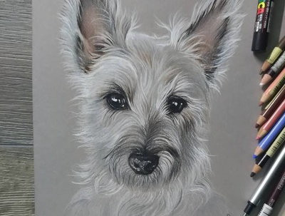 Draw  custom pet portrait form your photo, colored pencils