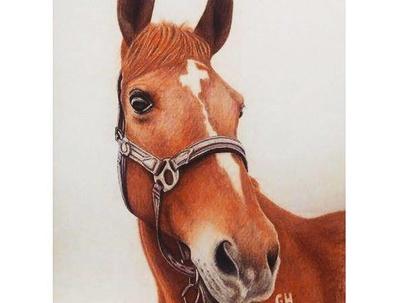 Animal Illustration or Pet Portrait