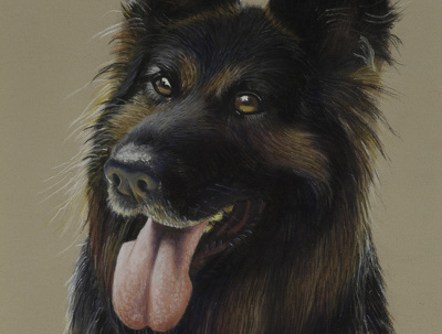 Draw pet portraits in pastel