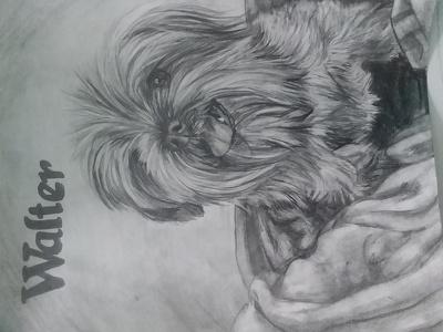 Sketch a portrait