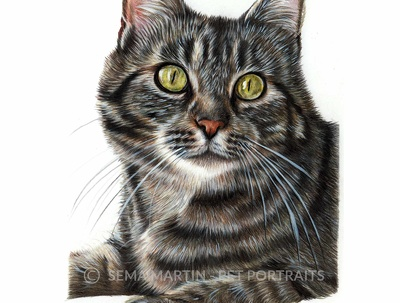 Draw custom pet portraits from your photos in colour pencil