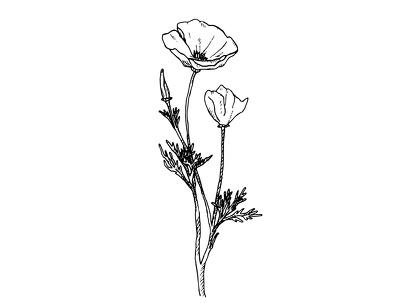 Create black & white botanical illustration using ink