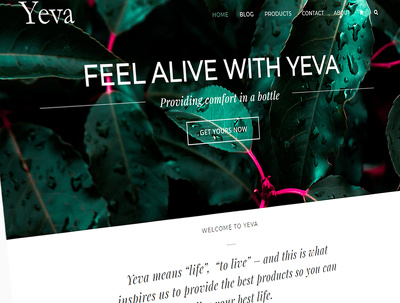 Implement Avada Theme on Wordpress platform