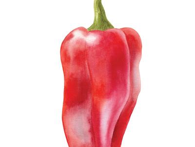 Illustration of realistic looking vegetable