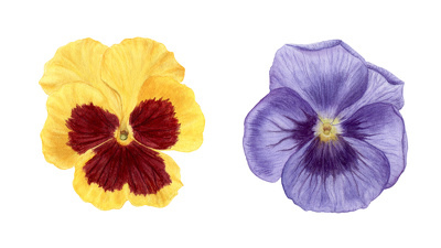 Illustration of realistic looking flower