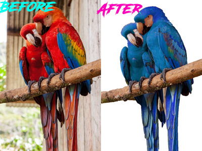 Do Photo editing, remove background of 50 images upto 24 hours