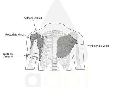 Desing 2d/3d medical diagrams