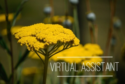 Virtual Assistant / Data Entry /Admin Support for 1 hour